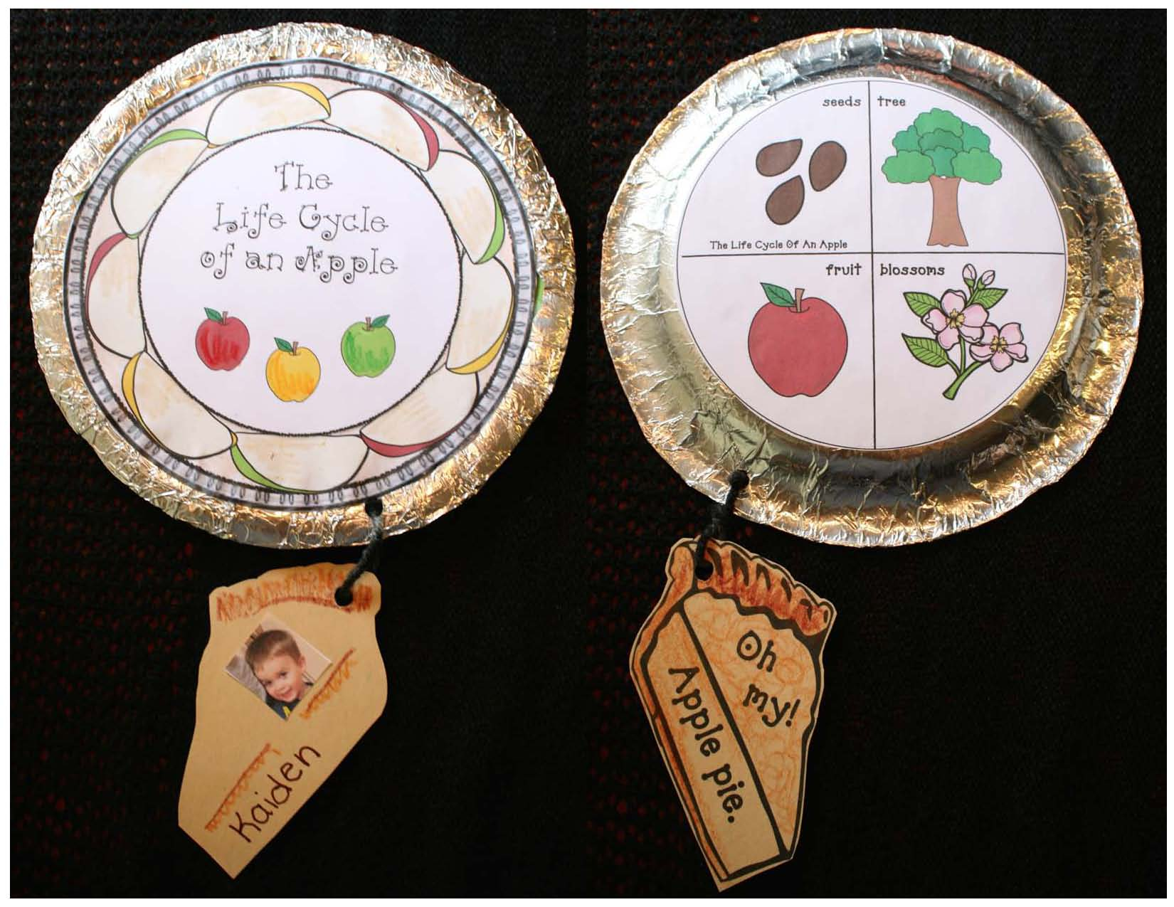 apple activities, apple crafts, life cycle of an apple crafts, life cycle of an apple emergent reader, apple graphs