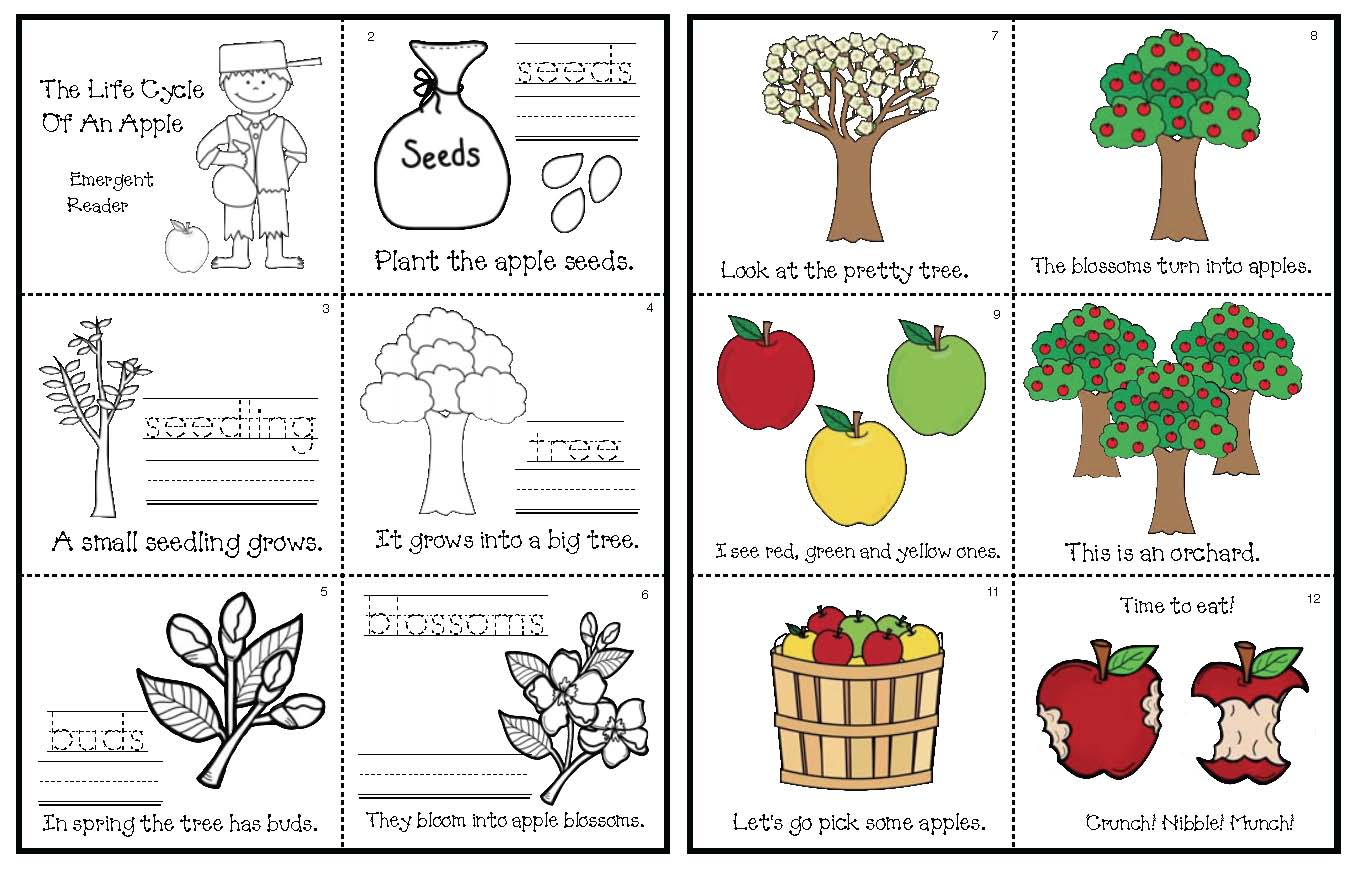 emergent reader pix life cycle of an apple tree,apple activities, apple crafts, life cycle of an apple crafts, life cycle of an apple emergent reader, apple graphs