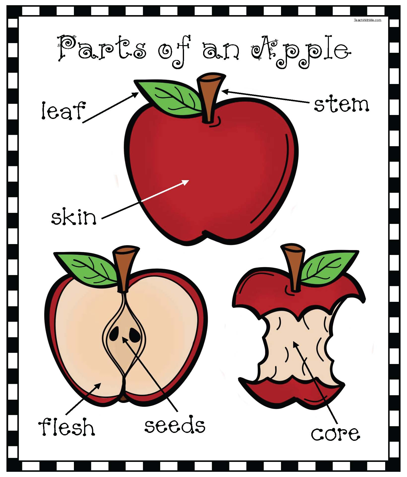 parts of an apple activities, apple activities, apple worksheets, apple emergent reader, apple crafts, stained glass tissue paper apples, parts of an apple poster, parts of an apple worksheet, parts of an apple pocket chart cards