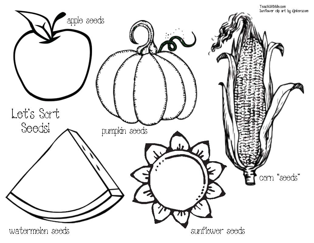 seed activities, seed lessons, seed centers, math centers for fall, pumpkin activities, apple activities, sunflower activities, pumpkin seed activities, apple seed activities, sunflower seed activities, guesstimating, common core pumpkins, common core apples, common core sunflowers, seed booklet, studying seeds, seed facts, graphing activities,