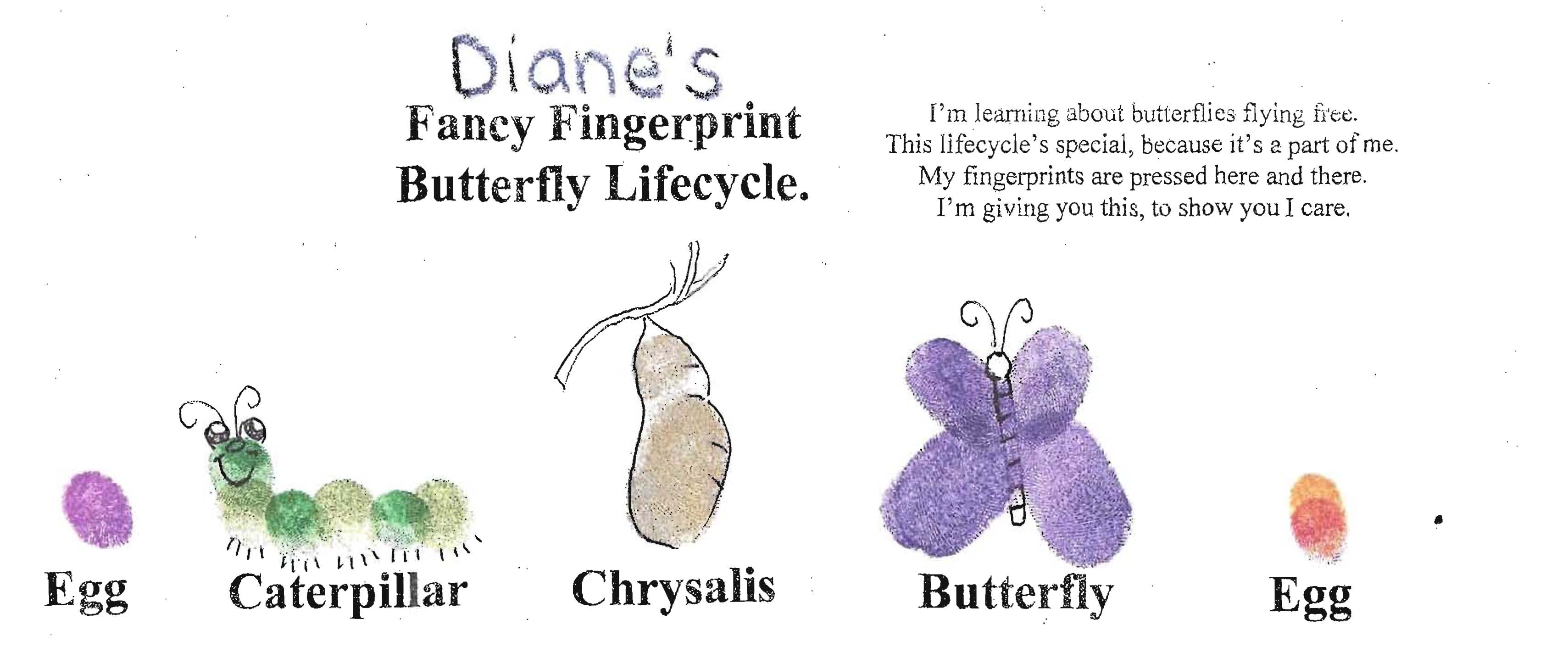 life cycle of a butterfly, butterfly activities, butterfly crafts, butterfly science, butterfly bulletin boards,