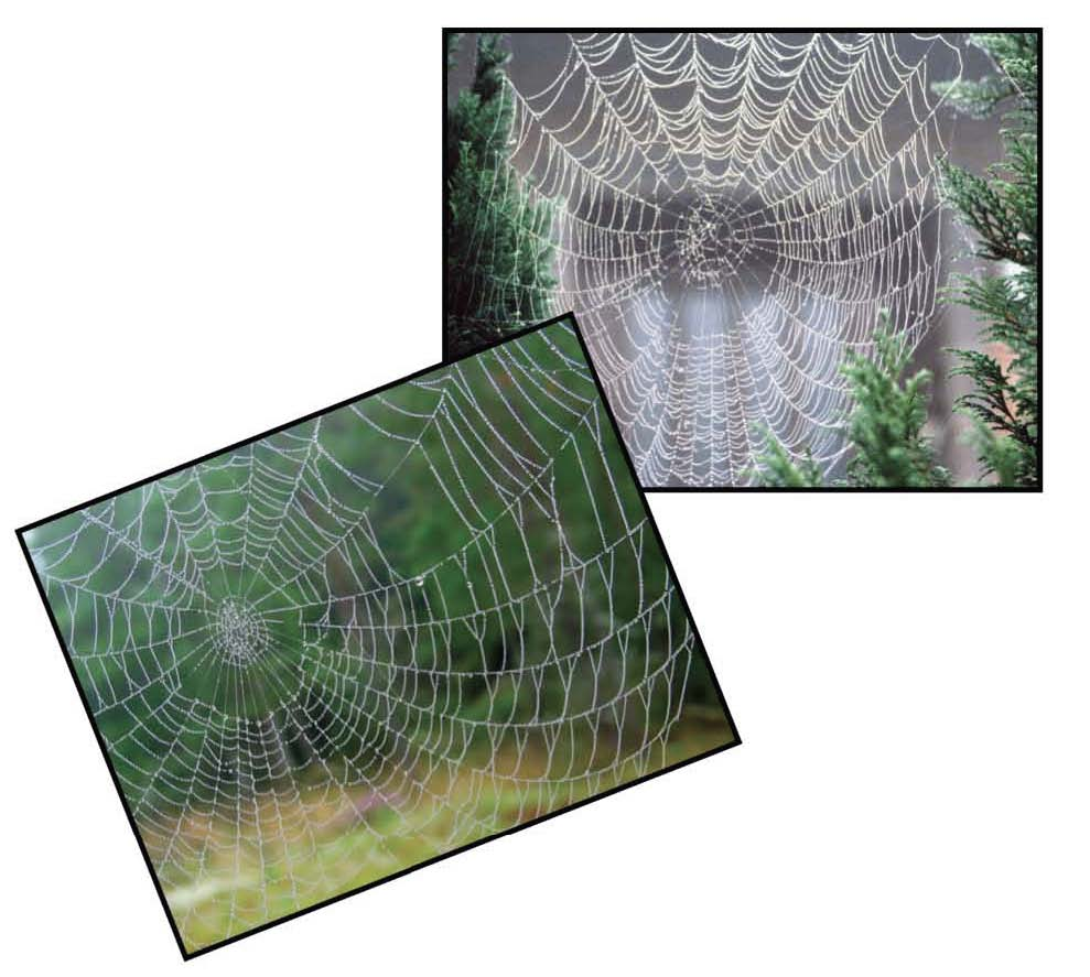 spider web photograph posters for the very busy spider activities