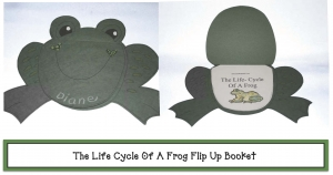 Life Cycle Of A Frog Flip Up Face
